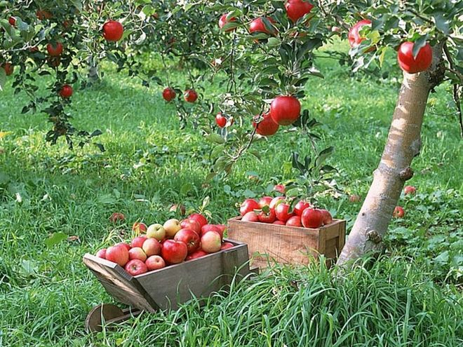 Бизнес план на садоводство скачать программы для бизнес плана