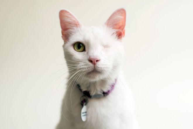 Американский фотограф снимает слепых кошек, чтобы помочь им найти хозяев