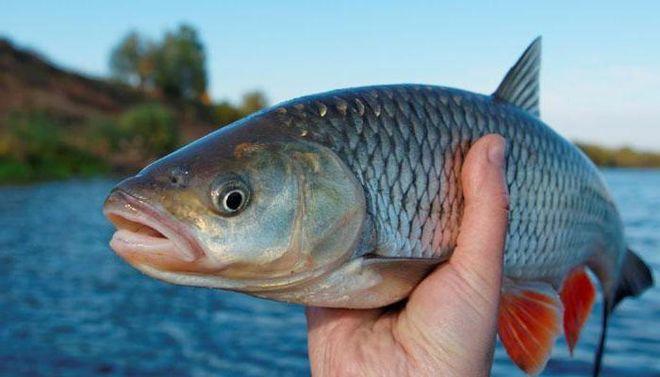 Украина открыла новые внешние рынки для сбыта рыбы