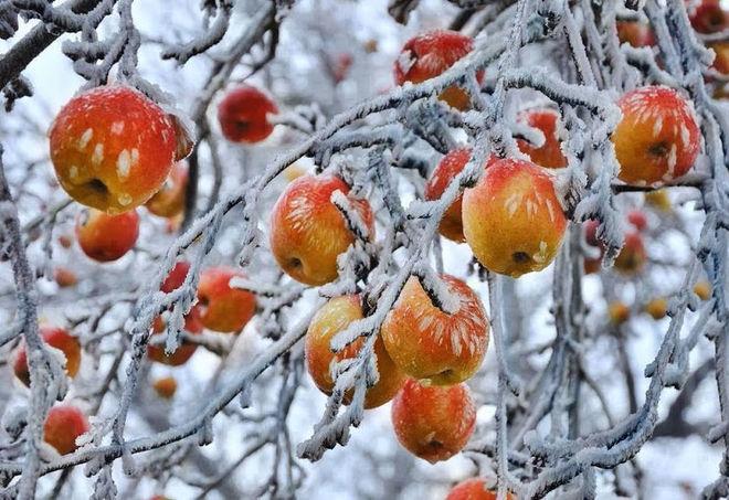 Поляки спровоцировали очередное подорожание яблок в Украине