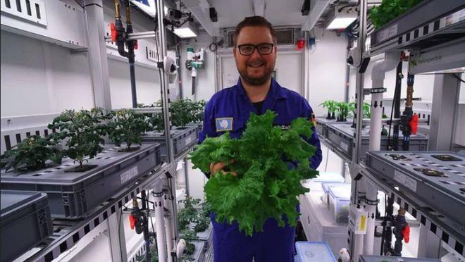 В Антарктиде собрали первый урожай овощей