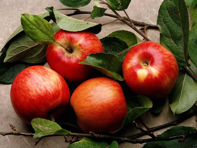 26 производителей яблок объединятся