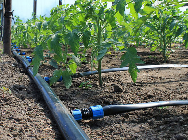 Новые тарифы на воду приведут к удорожанию овощей и риса для украинцев