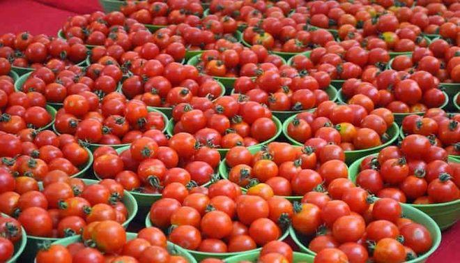 В Украине подешевели томаты: почем сейчас овощ