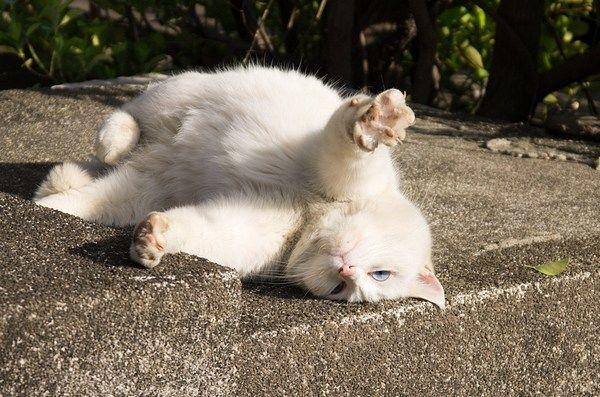 Беспризорных котов признали частью экосистемы города Днепра