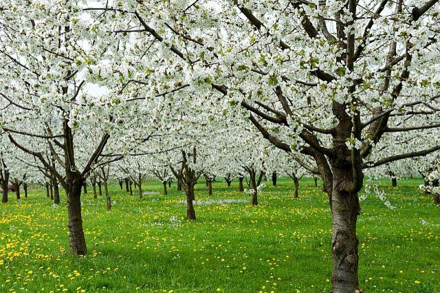 Какой будет погода 1 мая в Украине