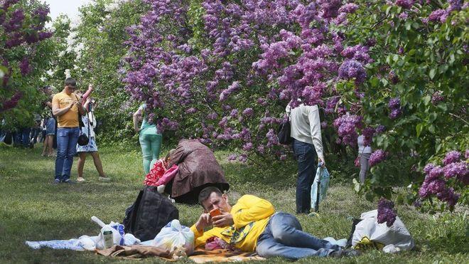 В Киеве началась «сиреневая лихорадка»