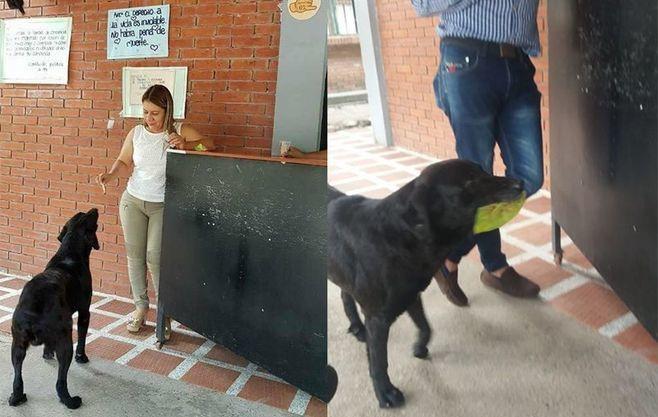 У колумбийского пса деньги растут на деревьях
