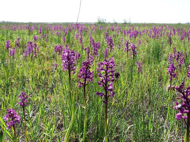 Украинскому государству вернули в собственность самое большое в Европе поле орхидей