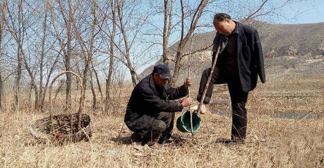 Два китайца с инвалидностью посадили 10 тысяч деревьев