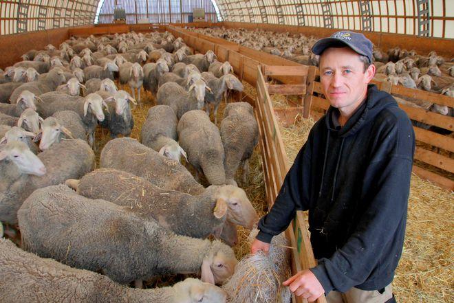Кудрявый бизнес: фермеры возрождают овцеводство в Украине