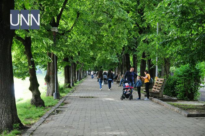 В Ужгороде начала цвести самая длинная липовая аллея в Европе