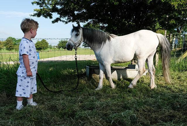 В Англии прошла крупнейшая в Европе цыганская ярмарка лошадей