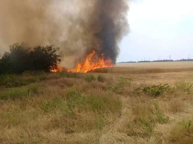 В Николаевской области выгорели гектары пшеницы