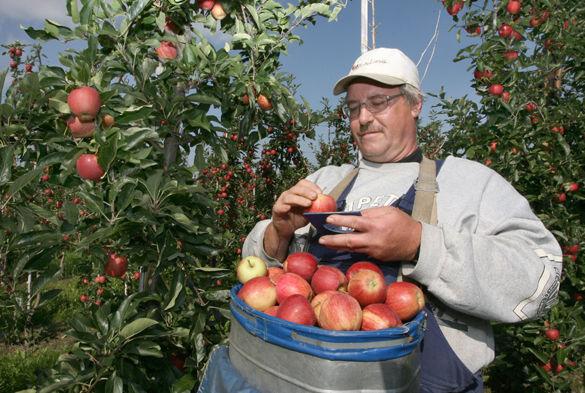 Украинские садоводы требуют снизить ставку НДС до 7%