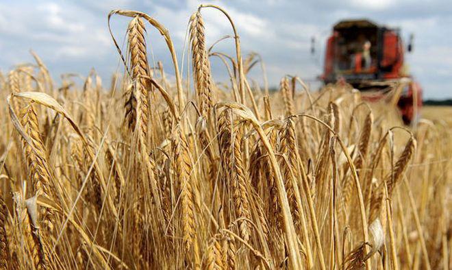 Японцы покупают украинскую агрокомпанию