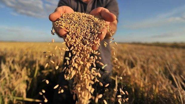 Украина заработала 6,4 млрд долларов на экспорте зерна