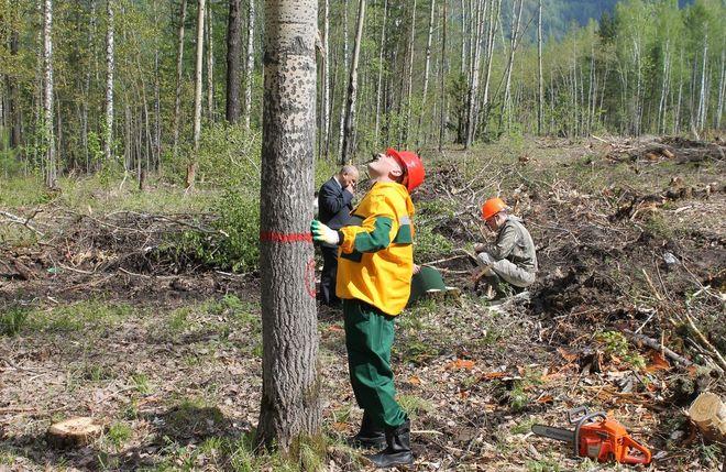 В Украине гибнет почти 500 тысяч гектаров леса