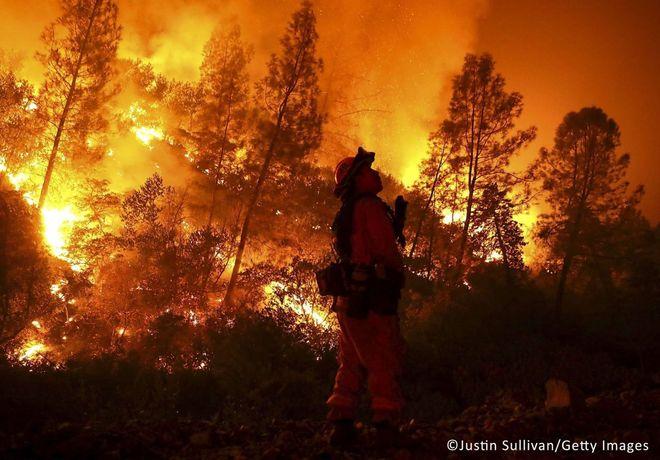 Лесные пожары этим летом охватили весь мир