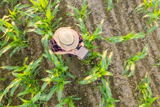 Аграрии активно набирают людей под полевые работы: сколько можно заработать - фото