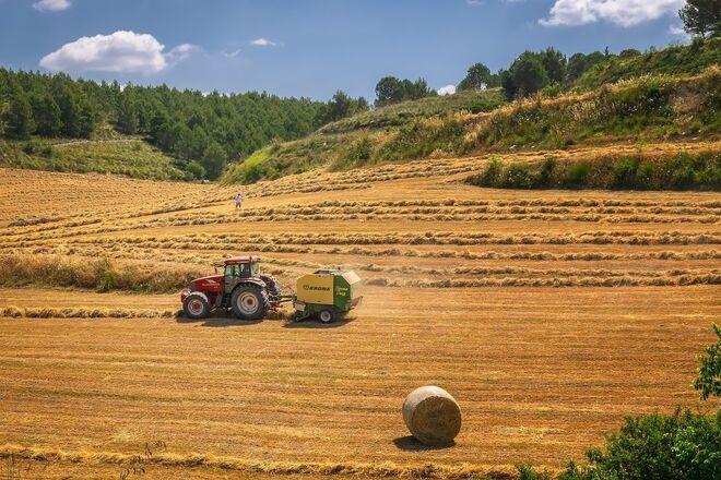 Эксперты прогнозируют Украине рекордный урожай зерна в 2021 году - фото