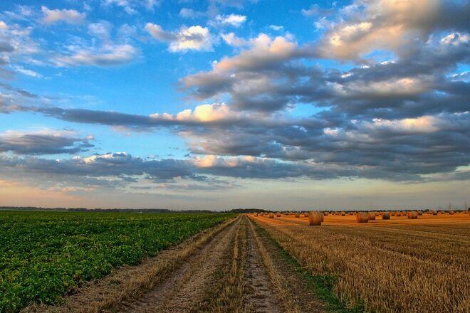 Рынок земли: украинцы заключили более 1700 сделок – данные по областям - фото