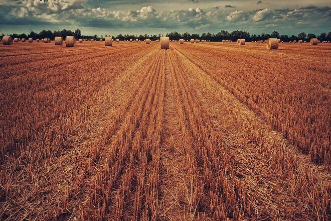 Аграрии установили исторический рекорд по сбору двух культур - фото